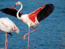 25 amazing Bahrain facts