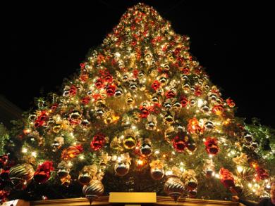 Tree lighting ceremonies to attend this week
