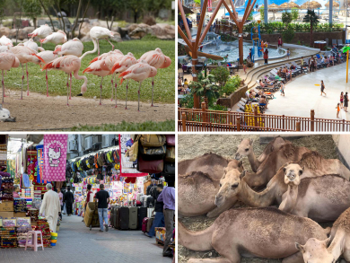 Fifteen family days out for you to try in Bahrain