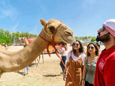 The best guided tours of Bahrain