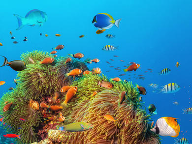 You can explore the Great Barrier Reef with David Attenborough from Bahrain