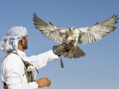 Bahrain to promote traditional sports